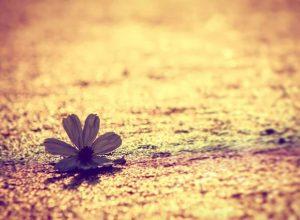 cvet na putu