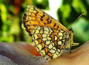 sareni leptir na ruci